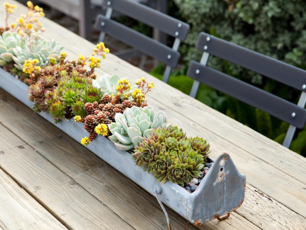 Succulent Table Garden
